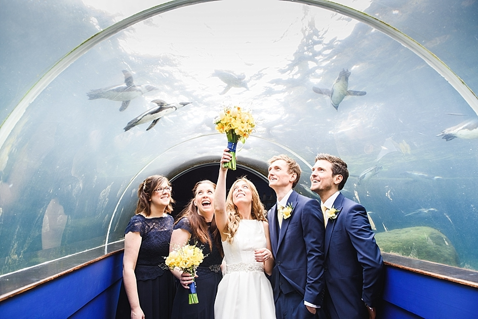 Bride ads up bouquet as penguins swim over the head of bridal party at Bristol zoo