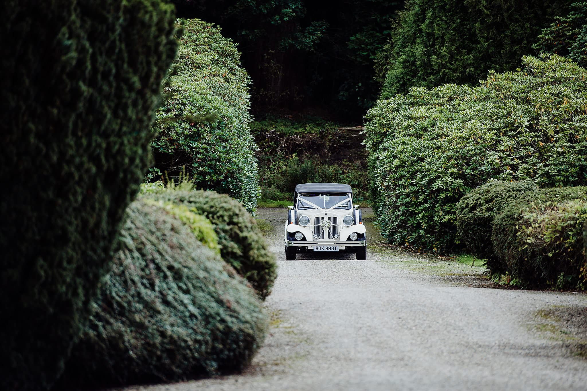 Vintage cream wedding car travelling down the drive of Gregnog Hall wedding venue
